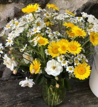 Cheerful Feverfew and Golden Marguerite Kelways
