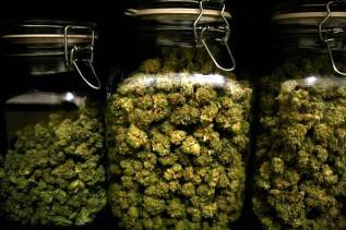 for-great-cannabis-its-all-in-the-cure-weedist-e14217208514921